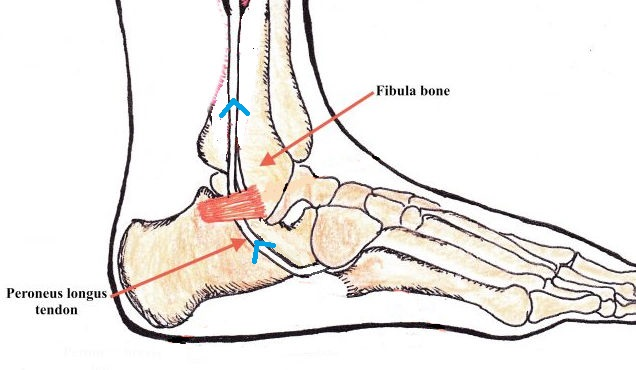 Cuboid Syndrome Ankle Foot And Orthotic Centre